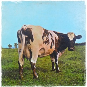 2009 Cow